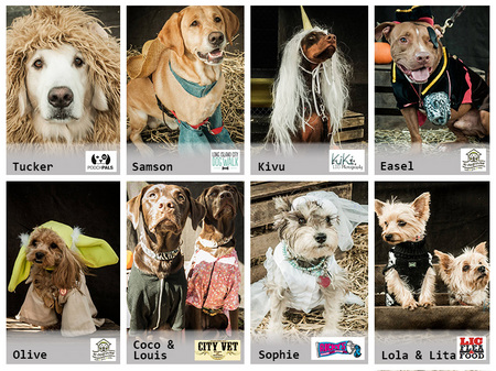 LIC-Pet-Costume-Contest-8-Winners.jpg