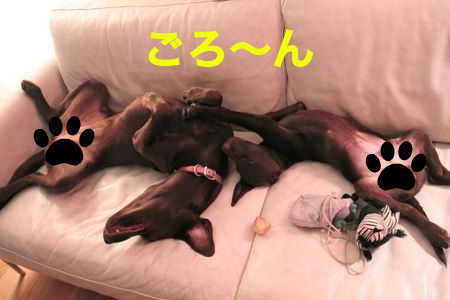 2labs-sleeping05.jpg