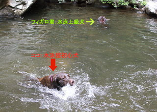 dogs-in-the-river1.JPG