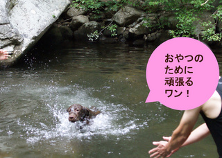 dogs-in-the-river2.JPG