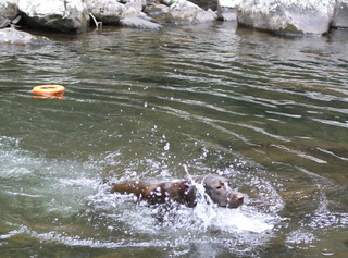 dogs-in-the-river3.JPG